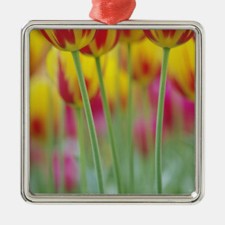 Close-up of underside of tulip flower, 3 christmas tree ornaments