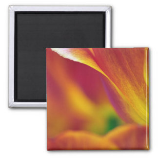Close-up of underside of tulip flower, 4 magnets