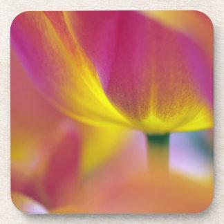 Close-up of underside of tulip flower, Kuekenhof 2 Beverage Coaster