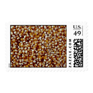 Close-up of unpopped popcorn kernels texture postage
