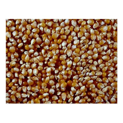 Close-up of unpopped popcorn kernels texture post cards