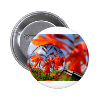 Close up of vibrant Orange flower in field with bl 2 Inch Round Button