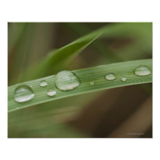 Close up of wet tropical leaf 4 print