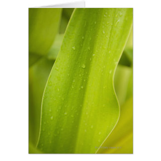 Close up of wet tropical leaf card