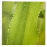 Close up of wet tropical leaf ceramic tiles