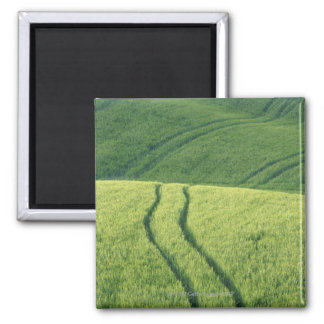 Close up of Wheat Field with Tire Tracks, Magnet
