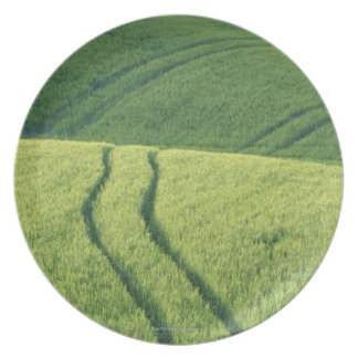 Close up of Wheat Field with Tire Tracks, Plates