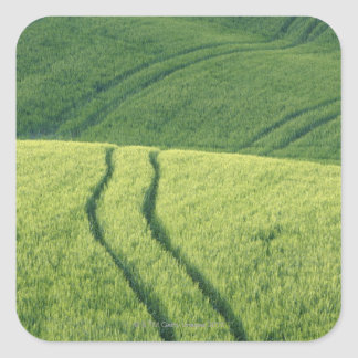 Close up of Wheat Field with Tire Tracks, Square Stickers