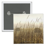 Close up of Wheat Photography Pinback Buttons