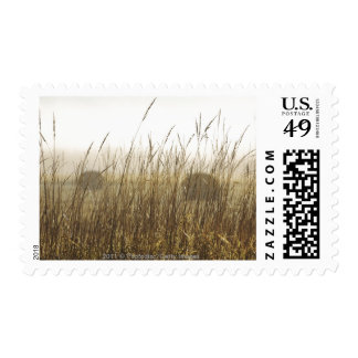 Close up of Wheat Photography Postage Stamp
