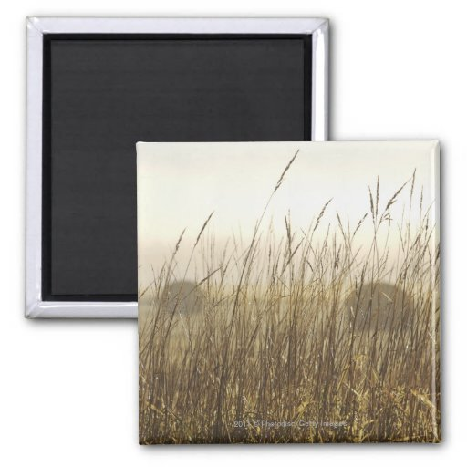 Close up of Wheat Photography Refrigerator Magnet
