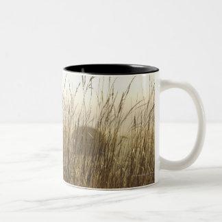 Close up of Wheat Photography Two-Tone Coffee Mug