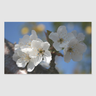 Close Up Of White Cherry Blossom Flowers Rectangle Sticker