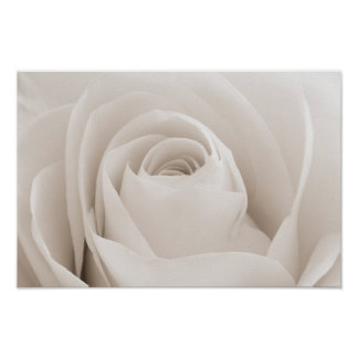 Close up of White Rose Petals Poster