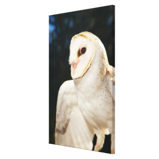 Close-up of wild owl canvas print