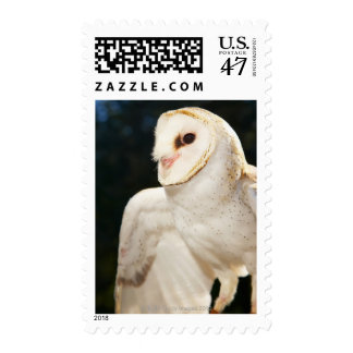Close-up of wild owl postage