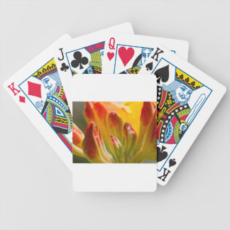 Close up of yellow rhododendron poker cards