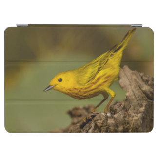Close-Up Of Yellow Warbler iPad Air Cover