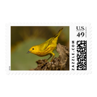 Close-Up Of Yellow Warbler Postage Stamp