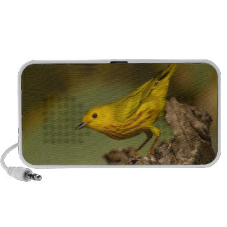 Close-Up Of Yellow Warbler iPhone Speaker