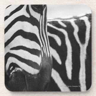 Close-up of zebra face and shoulder drink coasters