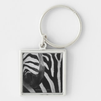 Close-up of zebra face and shoulder keychain