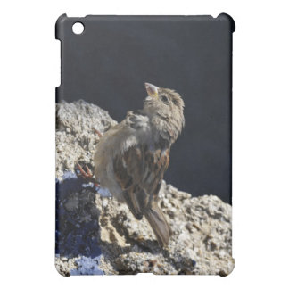 Close-up on a little sparrow on a rock cover for the iPad mini
