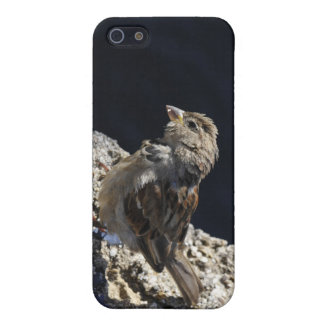 Close-up on a little sparrow on a rock iPhone 5 case