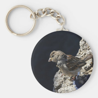Close-up on a little sparrow on a rock keychain