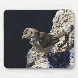Close-up on a little sparrow on a rock mouse pad