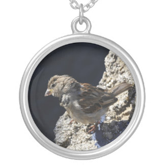 Close-up on a little sparrow on a rock necklaces