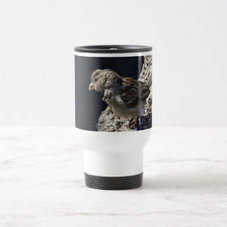 Close-up on a little sparrow on a rock travel mug