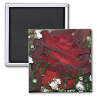 Close-up on a red rose refrigerator magnet
