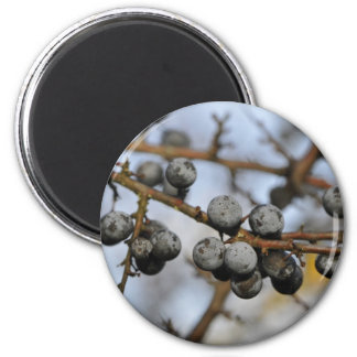 Close-up on black berries with a blured background 2 inch round magnet