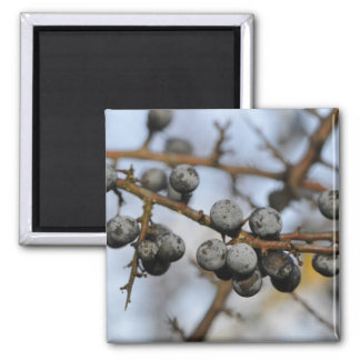 Close-up on black berries with a blured background 2 inch square magnet
