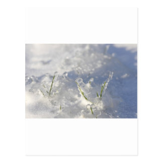 Close-up on green grass stems very iced postcard
