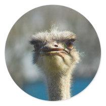 Close_Up_Ostrich_FullSize.jpg Classic Round Sticker