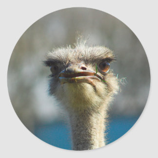 Close_Up_Ostrich_FullSize.jpg Classic Round Sticker
