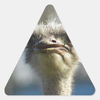 Close_Up_Ostrich_FullSize.jpg Triangle Sticker