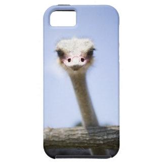 Close up Ostrich head iPhone SE/5/5s Case