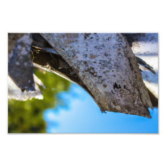Close up Palm Tree print Photograph