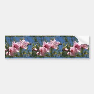 Close Up Peach Tree Blossom Against Blue Sky Bumper Sticker