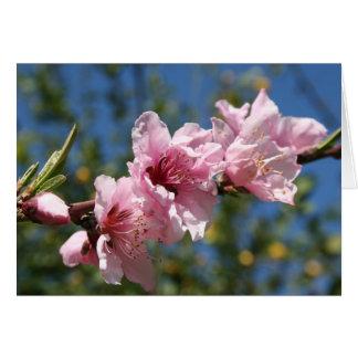 Close Up Peach Tree Blossom Against Blue Sky Greeting Card