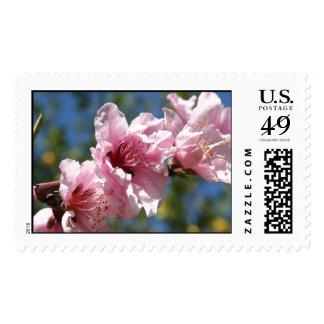 Close Up Peach Tree Blossom Against Blue Sky Stamps