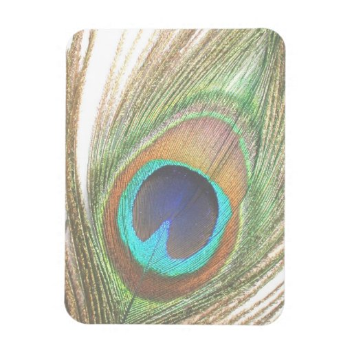 Close Up Peacock Feather Rectangular Magnets