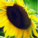 Close Up Photo of a Sunflower Statuette