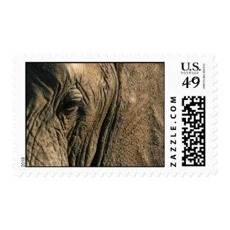 Close-up photo of African elephant eye Postage