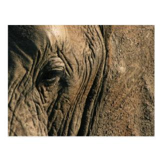 Close-up photo of African elephant eye Postcard