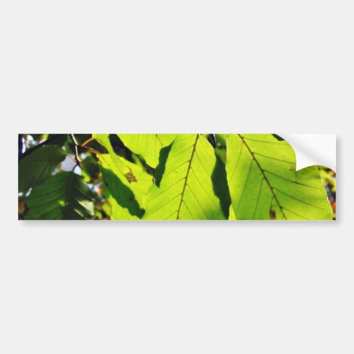 Close Up Photo Of Beech Leaves Car Bumper Sticker