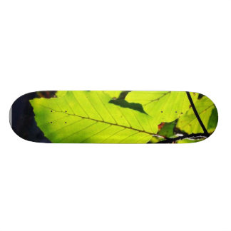 Close Up Photo Of Beech Leaves Skateboards